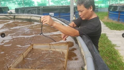 Mô hình nuôi tôm thẻ chân trắng công nghệ InRAS tại Thủy Nguyên, Hải Phòng